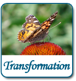 Transformation - Transform to Your Greatest Potential